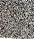 Cumin Seed Singapore