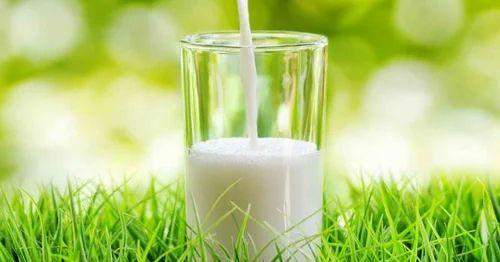Grassfed A2 MILK at Rs 100 /litre | Fresh Cow Milk | ID: 17845556788