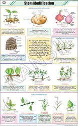 Stem Modification For Botany Chart