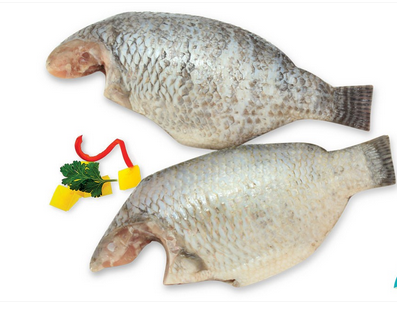 Tilapia Fresh Water Fish