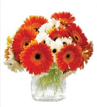 Orange white 12 orange and white gerbera flowers in a vase rs 649 orange white 12 orange and white gerbera flowers in a vase mightylinksfo
