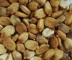 Lohki Seed
