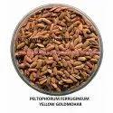 Peltophorum Ferrugineum Yellow Gulmohar Seed
