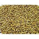 Ramganj Variety Coriander, Packaging Type: Gunny Bag