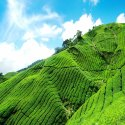 Darjeeling And Kalimpong Tour