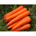 Delicious Fresh Carrot, Packaging: Box