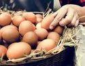 Brown Desi Poultry Farm Eggs