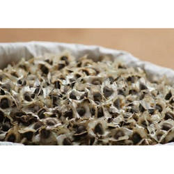 Certified Pkm-1 Moringa Cultivation Seeds