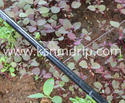 Garden Flat Emitter Pipes Irrigation System