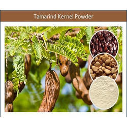 100% Natural and Fresh Tamarind Kernel Powder