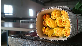 Bella Rosalia Gold Strike - Yellow Roses