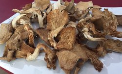 Dried Oyester Mushroom