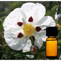 Labdanum Floral Absolute Oil