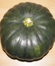 Winner Hybrid Pumpkin Seeds