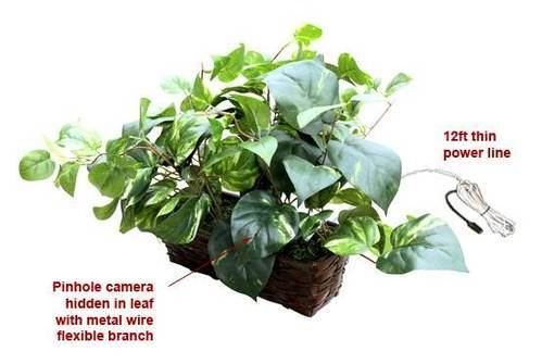 Spy Camera in Flower Pot