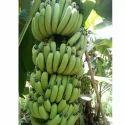 G9 A Grade Grand Naine Banana, Packaging Type: Carton