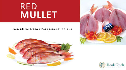 Edible Seafood - Pinjalo Snapper Fillet Retailer from Chennai