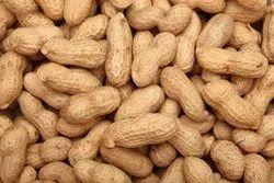 Shukan Sortex Peanut Seeds, Packaging Size: 20, 50kg, Packaging Type: Sacks