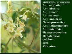 Natural White Moringa Dried Fresh Flowers, For Tea