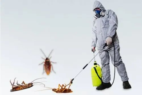 Cockroach Control Service in Thane by Poonam Cares Pest Control Services |  ID: 21272140155