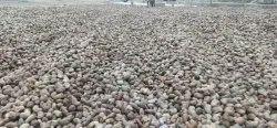 Benin Raw Cashew Nuts, Packaging Type: Sacks, Packaging Size: 80kg