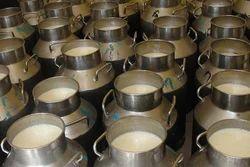 Fresh Cow's Milk, Packaging Type: Loose Milk