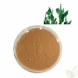 Brown Caralluma Fimbriata Powder for Weight Management, Packaging Size: 25 kg
