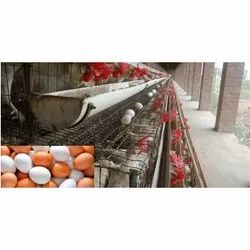 Layer Poultry Farming Project Report