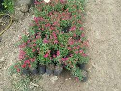 Round Garden Plants