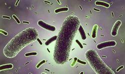Lactobacillus Rhamnosus Probiotics