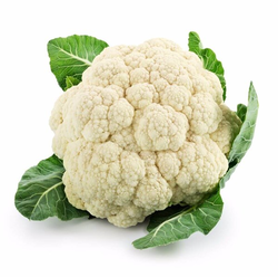 White And Green Garden Fresh Cauliflower /Phool Gobhi