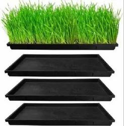 Wheat Grass Tray