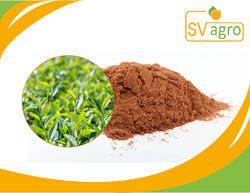 Green Tea Extract 90%