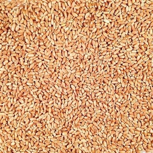 White Winter Wheat, Packaging Size: 30 And 50 Kg, Gluten Free