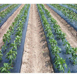 Mulching Sheets In Bengaluru Karnataka Get Latest Price