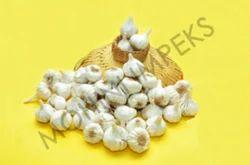 Origin - C Garlic 40 Mm Plus