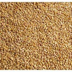 Lok 1 Wheat Seed