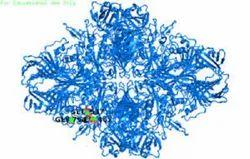 B-Galactosidase