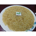 1509 Golden Rice