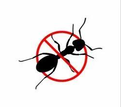 Ant Management Service