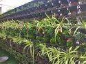 Vertical Gardens Green Walls