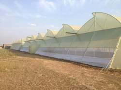 205N Greenhouse Film Yellow Diffused - Ginegar Brand