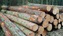 Solomon Round Logs