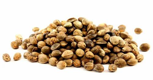 Organic Certified Raw Hemp Seed at Rs 175/kilogram   Hemp Seeds   ID:  17460487088