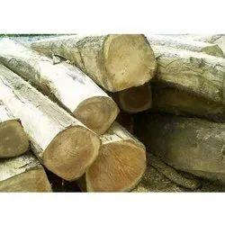 Kikar Wood Log