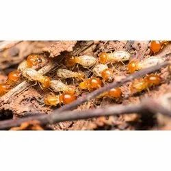 Spray Chemical based Termite Pest Control Service, in Local