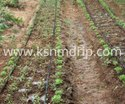 Micro Irrigation System