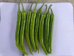 Natural Green 166 Hybrid Chilli, For Cultivation