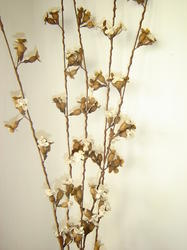 Natural Shola Stem Items, For Decoration, Size/Dimension: 24 Inches Long Flower Sticks