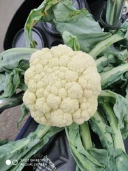 A Grade Green Couliflower, Gunny Bag, 20 Kg